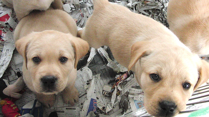 子犬の社会化期