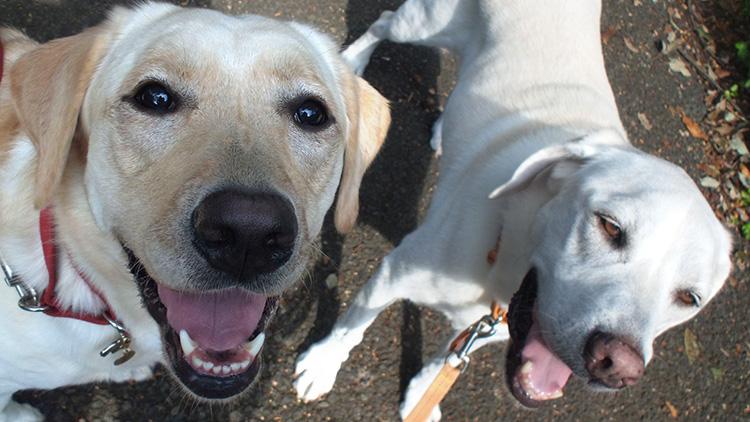 犬同士のコミュニケーションにもドッグトレーニングが