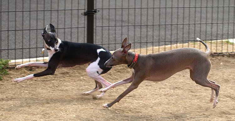 犬同士の遊び・コミュニケーションに役立つ犬のしつけ