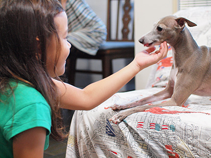 愛犬と家族。最高のパートナーとして楽しく暮らせるように。