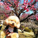 Machida犬部